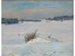 Křoviny pod sněhem