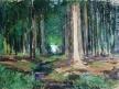 Potok v lese